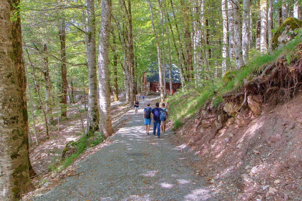 Stradina all'interno del parco di Biogradska Gora, ecco cosa vedere durante le vacanze in Montenegro