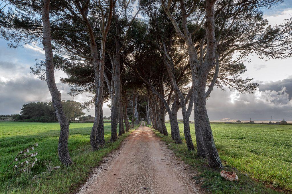 Via alberata con campi ai lati che conduce al monastero da vedere durante le vacanze a Otranto