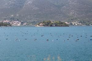 IMG_2037 Spalato/Parco di Krka